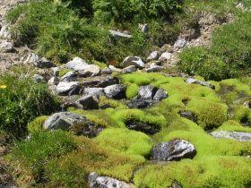 Natur pur auf der Schleiser Alm