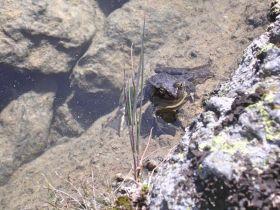 Der Froschkönig?